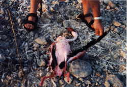 Untouched body of this flamingo  led scientists to search for other cause of death